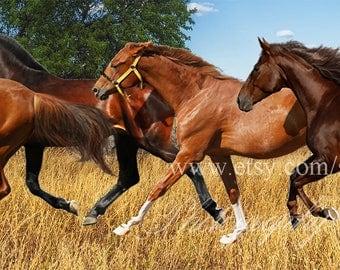 Horses png clip art - horses photoshop overlay animals clipart