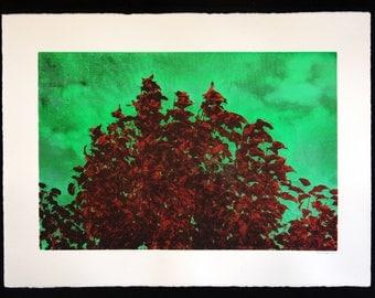 Kalga Appletree Silkscreen art print