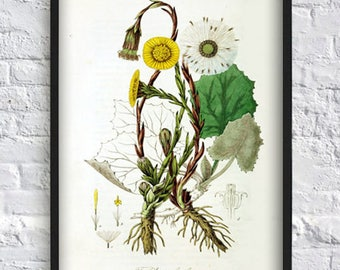Yellow flower print green plant print flower poster leaves botanical print vintage illustration wall art decor home office medical botany