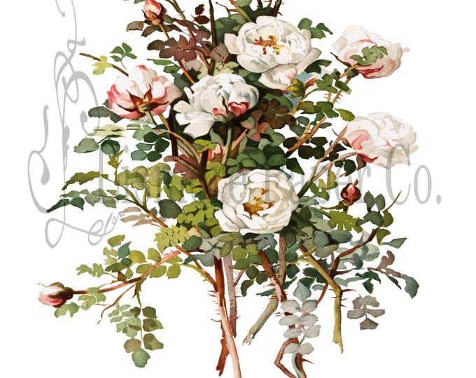 White Rose Print, Rose Illustration, Botanical Decor, Flower Decor, Digital Art, Printable Art, Instant Download, Architecture Decor, Craft