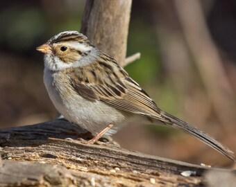 BIRD FAMILIAR