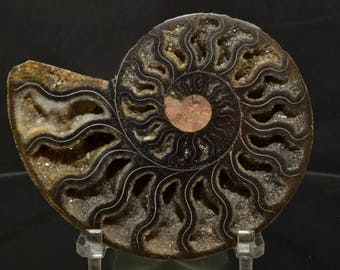 Ammonite Fossil, Ammonite , Fossil, Home Decor Specimen, Collectors Fossils, Ammonite Polished Fossil, Display Fossil, Home & Living