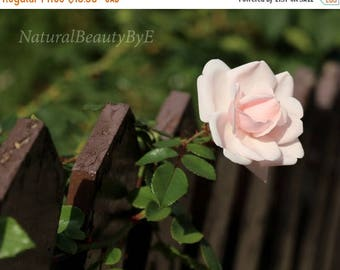 ON SALE NOW Pale pink rose print, rose in picket fence, fence with rose, flower photography, nature, garden, floral wall art, fine art, prin