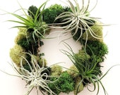 Air Plant and Moss Table Accent Living Wreath