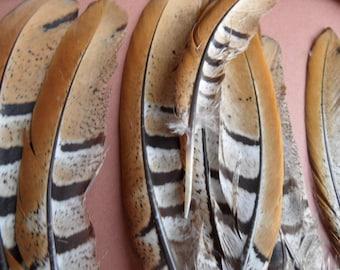 camel feathers, pheasant revered, 2, original!