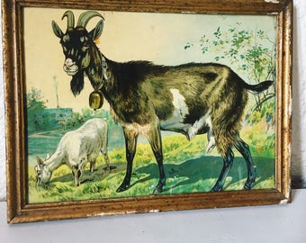 Antique Chromo representing goats grazing. 1930 s. french antique