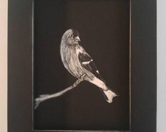 Bird art: Goldfinch drawing on scratchboard