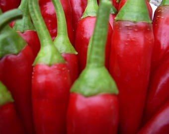 25 SUCETTE de PROVENCE PEPPER French Heirloom Heat W/ Age Capsicum Annuum Seeds