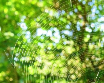 Spider web photography, nature photo, instant download, cobweb photo, wall art, home decor, printables, bokeh effect photo