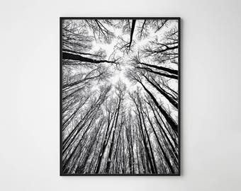 Forest Print, Black and White Forest, Forest Printable, Nature Print, Tree Print, Forest Photography, Minimalist Art, Forest Poster