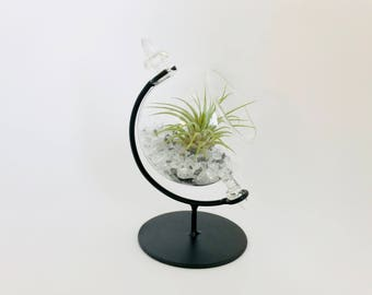Terrarium, terrarium kit, air plant, tillandsia, desk, black and white
