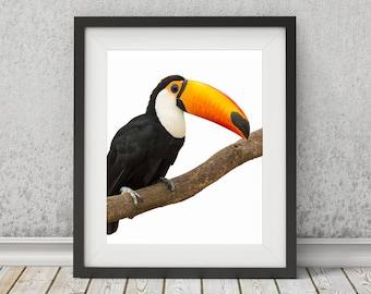 Bird Print, Animal Printable Art, Bird Printable, Toucan Wall Art, Bird Poster, Bird Art, Toucan Poster, Toucan Wall Art Print, Bird Decor