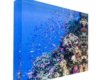Fish on tropical coral great barrier reef 20x15x3cm Acrylic Photography Print