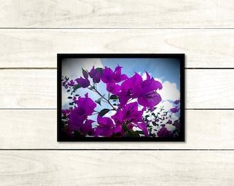 Purpose, Floral Photography, A3 Unframed High Gloss 140gsm, wall art, Unframed photo, A3 (29.7cm x 42cm), Flower print, Modern Art