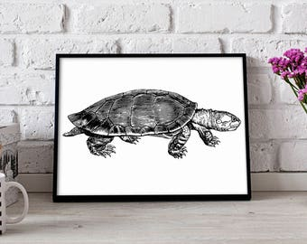 Turtle Reptile poster, Turtle Reptile wall art, Nautical poster, Turtle Reptile wall decor, Turtle Reptile print