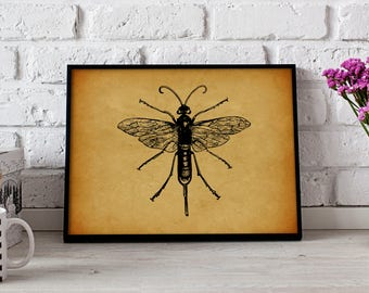 Wasp Insect Vintage poster, Gift poster, Wasp Insect wall art, Wasp Insect Vintage wall decor, Wasp Insect print