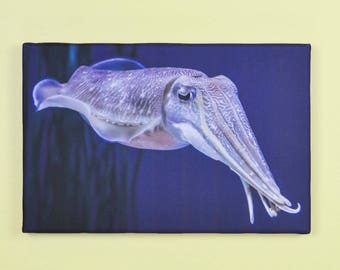 Cute Cuttlefish