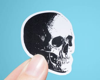 Skull Pop Art | Anatomy Sticker | Matte or Glossy Finish