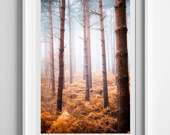 Foggy Woodland Trees, Original Photography Print, Autumn, Portrait, Wall Art, Decor