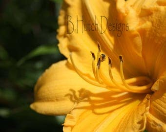 Day Lily Flower Close UP Macro Photography Print Digital Download