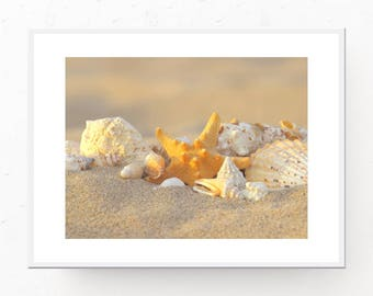 Starfish Print - Shells and Starfish Photograph, Digital Download, Beach Wall Art, Starfish Art Print, Printable Art, Beach Art Print Shells