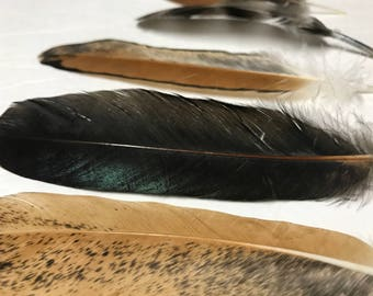 Beautiful Set of 5 Chicken Feathers for Crafts, Decorating, Jewelry and More