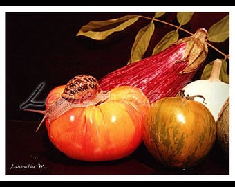 Photo background large 30X40cm on a snail on a tomato and pattypan