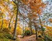 Autumn Woodlands Blank Gr...