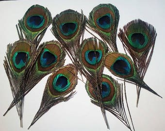 Great set of 10 Peacock eye feathers