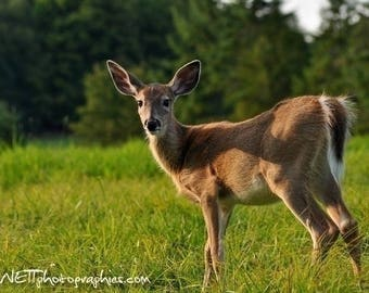 Two animal photographs: the deer and bird