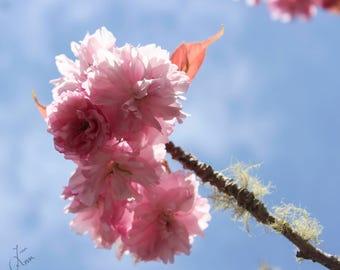Fine art photograph pink blossom