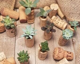 Magnetic Cork Succulent Planters, Mini Succulent Planters, Cork Planter