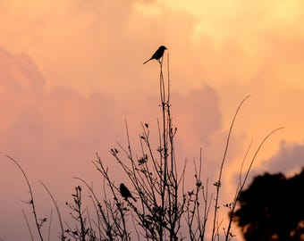 nature photography, photography, nature photo, sunset, birds, Florida sunset