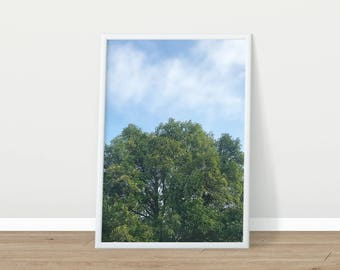Printable Photography - Nature Photography - Tree Photo - Printable Art