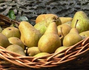 BARTLETT PEAR TREE Pyrus Communis Fruit 20 Seeds