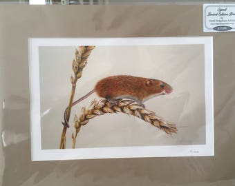Signed Limited Edition Field Mouse Mounted Print