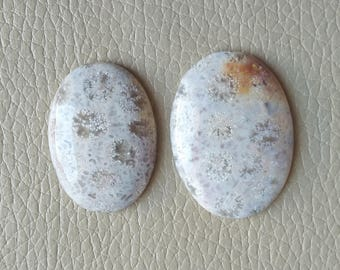 Beautiful Natural Fossil Coral Cabochon Size 38x27x7, 38x25x7 MM Approx, Good Quality Fossil Coral Cabochon, Fossil Coral Weight 83 Carat.