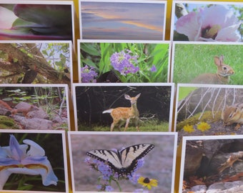 12 Assorted Nature Photography Cards