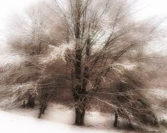 01 Snow Landscape