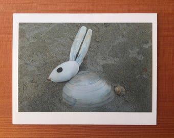 Arctic Hare notecard - Higgins Beach, ME