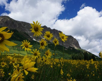 Colorado, Landscape Photography, Nature Photography, Fine Art Print - Gothic Road