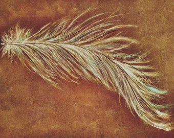 Pastel painting feather Giclee print.