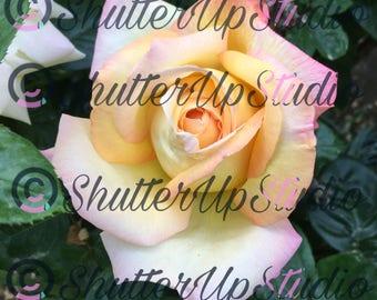 Rose(digital download)