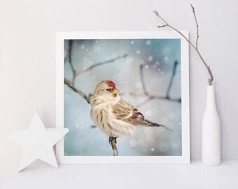 Winter Photography, Winter Art, Bird Photography, Snow, Bird Art, Winter Wall Art, Fine Art Print, Redpoll in Snow No. 8