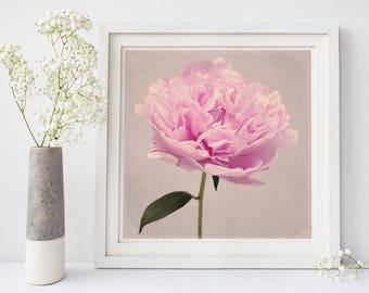 Peony Art Print, Floral Art, Girls Room Wall Art, Flower Photography, Large Wall Art, Kitchen Wall Art, Dining Room Wall Art, Nursery Decor