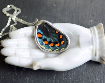 Pipevine Swallowtail Butterfly Necklace. Real Butterfly Wing Pendant. Real Butterfly Wing Jewelry. Nature Jewelry. Preserved Butterfly.