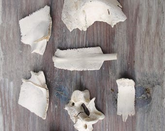 Instant Bone Collection Curiosities Collection Beach found Bones