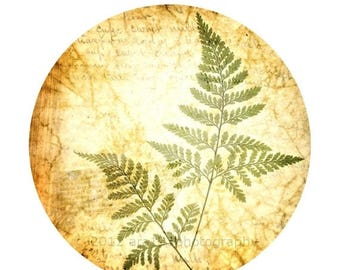 50% OFF SALE Nature Photography Fern Photo Rustic Decor Botanical Print Nature Decor Brown and Green Circular Image on an 8x10 inch Photogra