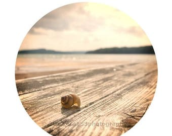 40% OFF SALE Shabby Chic Wall Decor Seashell Photo Beach Photo Pink and Peach Still Life Picture Round Image on an 8x10 inch Photography Pri
