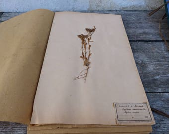 Antique-1887-1889-French-herbarium E Rameuse